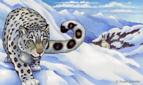 detwilerbclk_snowleopard