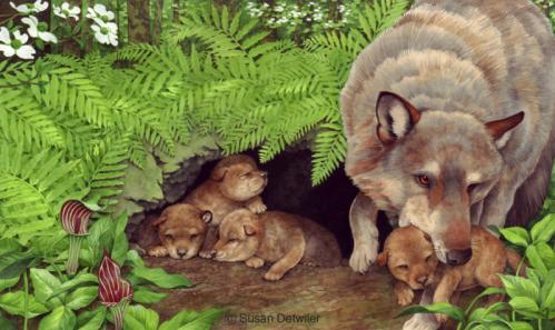 detwilerwolf_five