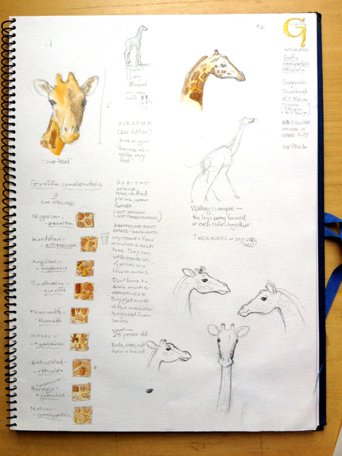 kirsten2-sketches