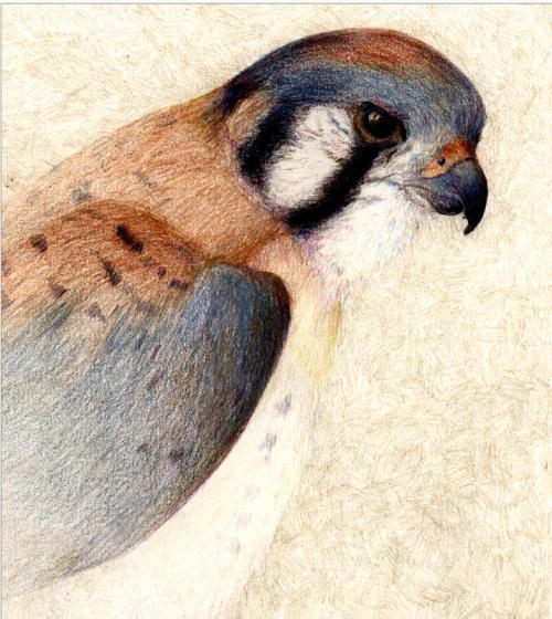 kirstenbird