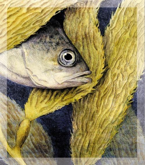 kirstenfisheye