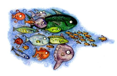 kirstenfishschool