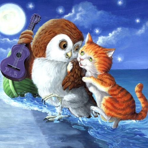 owl50668