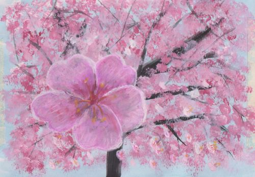 CeciliaClarkcherry blossom