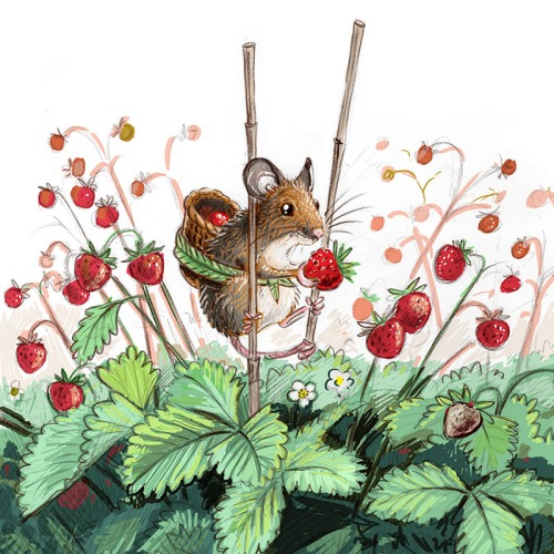 maja sereda wild strawberry mouse step 02