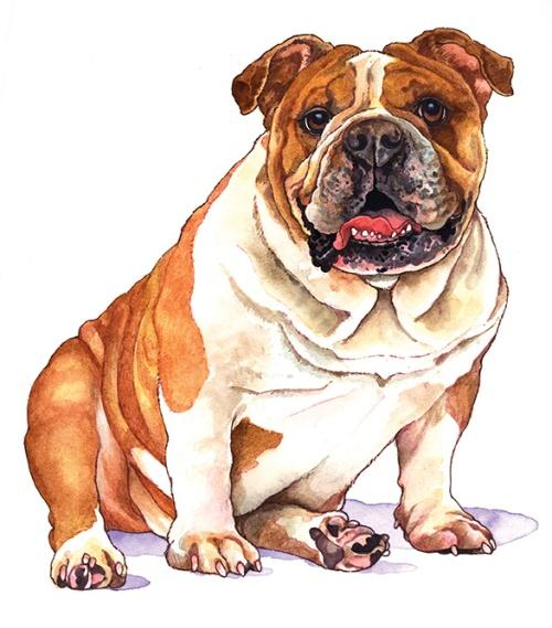 wendyWebBulldog