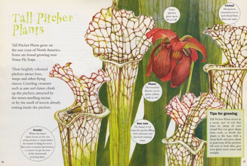 pitcherplants580px