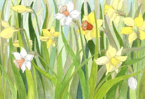 Daffodil-Fields_art