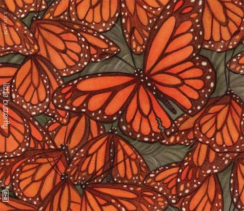 blog little butterflies wrap
