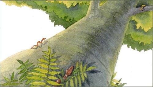 prespective tree