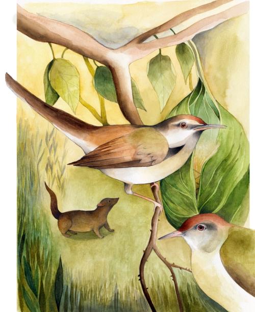 Ester Garcia Jungle book_low res (5)