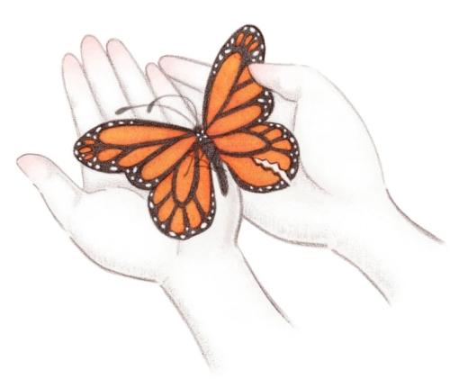 butterfly handscropped
