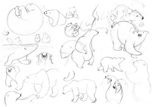 bear-study