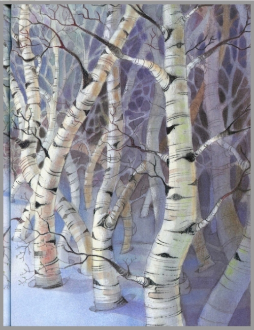 white-birch-trees