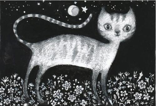 night-cat